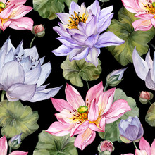 Large Pink And Purple Lotus Flowers With Leaves On Black Background. Beautiful Floral Seamless Pattern. Hand Drawn Botanical Illustration. Watercolor Painting.