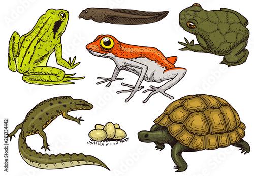 Fotografie, Obraz Reptiles and amphibians set
