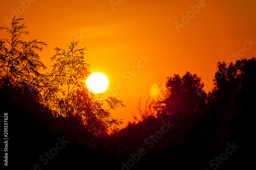 Sunrise tree silhouettes