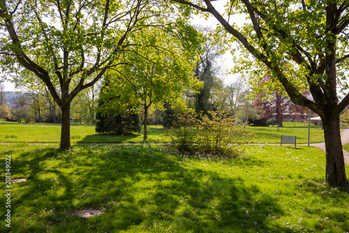 Fototapety, obrazy: park trees and branches with foliage on sprintime sunny day