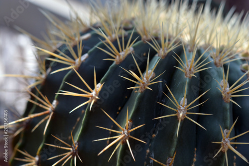 Tuinposter Cactus Kaktus