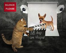 The Cat Holds A Clapperboard. The Dog Is Preparing To Shoot In The Film Studio.