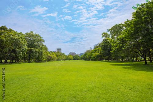 Foto op Plexiglas Landschappen Green grass green trees in beautiful park white Cloud blue sky in noon.