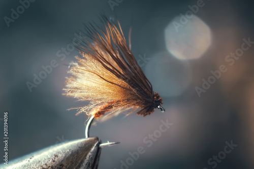 Fly for fly fishing.