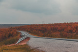 Northern Norway, autumn day on the side of the road - 201412867