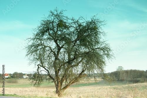 Spoed Foto op Canvas Turkoois Drzewo
