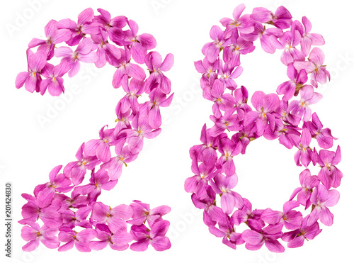 Fotografia  Arabic numeral 28, twenty eight, from flowers of viola, isolated on white backgr