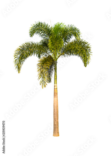 Green tree foxtail palm isolated on a white background. Wall mural