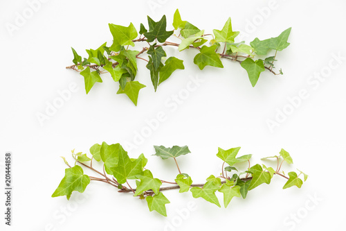Leinwand Poster ivyのフレーム