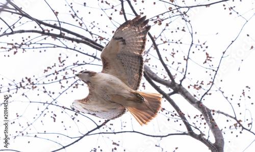 Deurstickers Uilen cartoon Young beautiful falcon flying under the tree