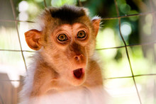 Monkey Expression Or Meme Are ...