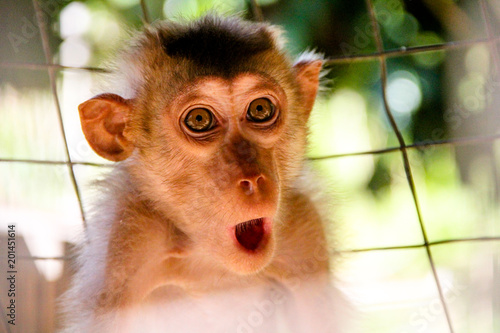 Fotomural Monkey expression or meme are captured