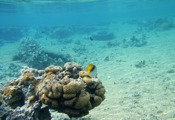 Beautiful coral reef in red sea