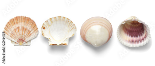 Collection Exotic conch isolated on a white background Wallpaper Mural