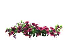 Petunia Flowers Hanging Basket