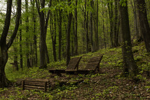 Wooden Chairs In The Forest, B...