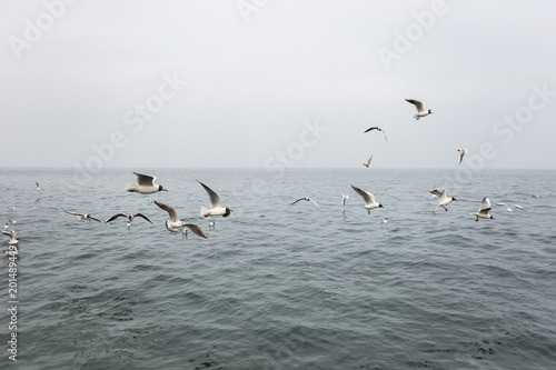 Many hungry seagulls flying in cloudy sea on rainy day. Horizontal color photography.