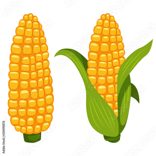 Fényképezés Corn cobs vector cartoon flat icon of sweet vegetable isolated on white background