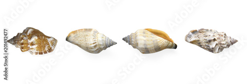 Collection Exotic conch isolated on a white background