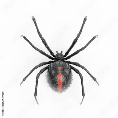Realistic 3d Render Of Black Widow Spider Buy This Stock