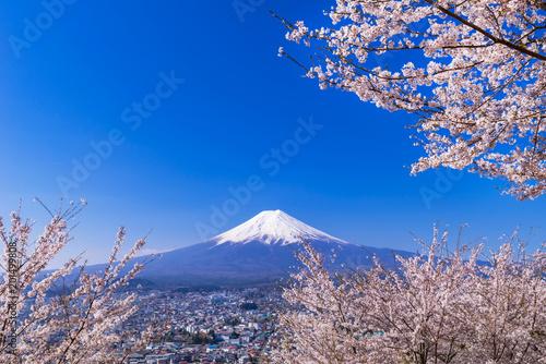 Obraz na plátne 満開の桜と富士山