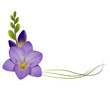 Realistic violet freesia, the symbol of love and trust, corner.