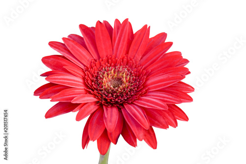 Fotobehang Gerbera Red gerbera on white background with clipping path