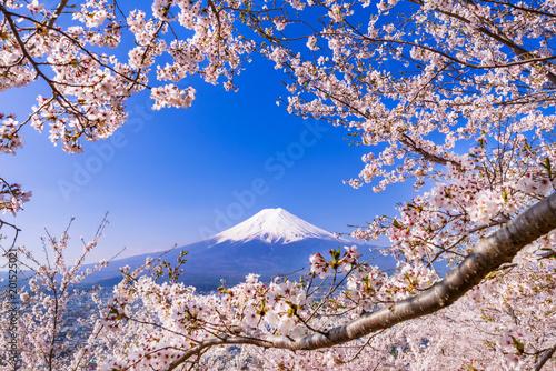 Cuadros en Lienzo 満開の桜と富士山 花のフレームに彩られた富士山の風景 / The scenery of Mt