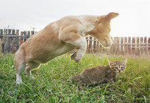 The Dog Jumps Over The Cat