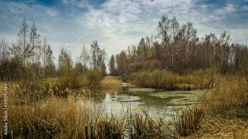 Vászonkép spring landscape