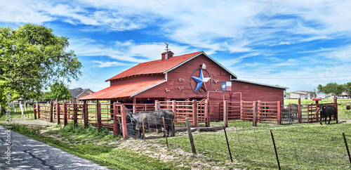 Poster Texas Old Red Barn with cattle..