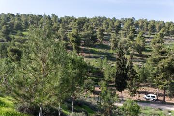 Fototapeta na wymiar Visiting Lahav Forest in northern Negev