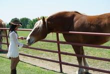 Woman Feeding A Horse In Rural North Texas