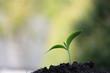Small plant planting
