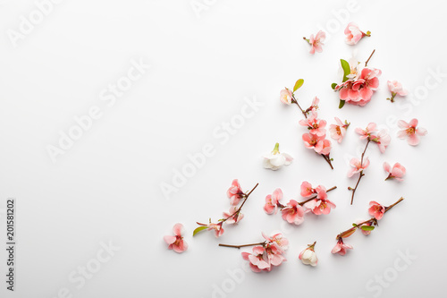 Tuinposter Bloemen Flowers composition. Frame made of branches of Japanese quince on white background. Flat lay, top view, copy space