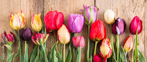 Fototapeta multicolored tulips on a wooden background, banner, old boards, spring flowers, tulips on the boards obraz