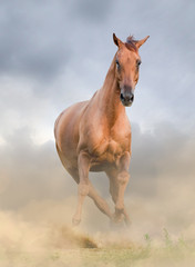 Beautiful chestnut horse front view