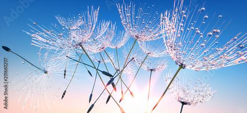 dandelion-z-kroplami-rosy