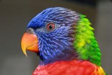 Closeup Of Blue, Green, Red An...