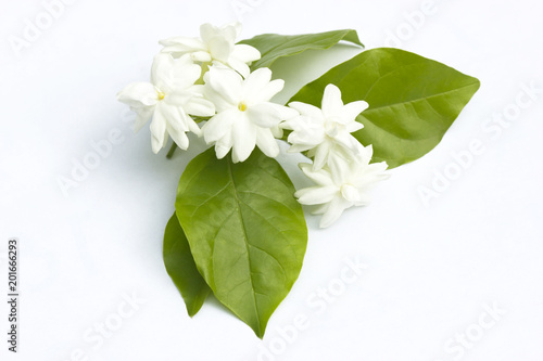 Photo White jasmine flowers fresh flowers
