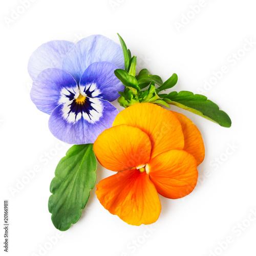 Papiers peints Pansies Pansy flowers