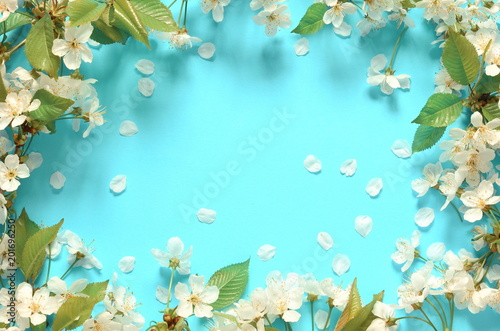 Canvas Prints Countryside Flowering branches and petals on a blue background