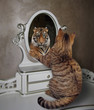 The cat looks at his reflection in the mirror. It sees a tiger there.