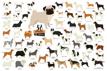 58 Breeds Of Dogs Isolated Obj...