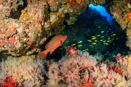 Tropical fish near an underwater archway on a tropical coral