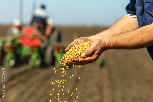 Close up of senior farmer with soybean seed in his hands. Billede på lærred