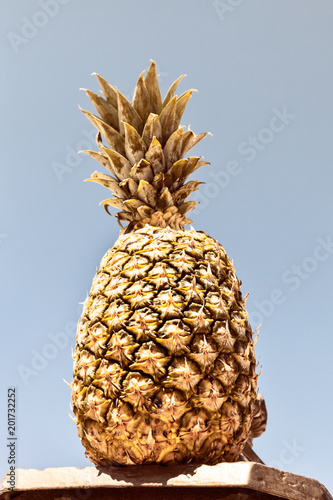 Fototapety, obrazy: Colorful Gold Pineapple On A Sky Background