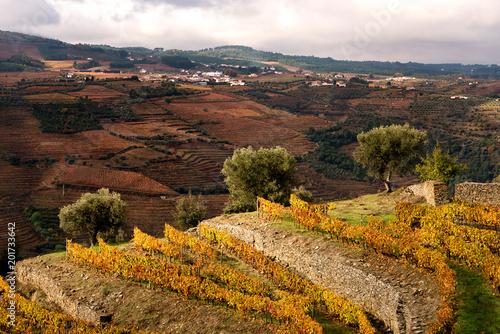 Foto op Plexiglas Chocoladebruin Douro River Valley