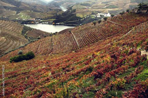 Foto op Plexiglas Diepbruine Douro River Valley