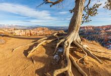 Bryce Canyon Winter Landscape